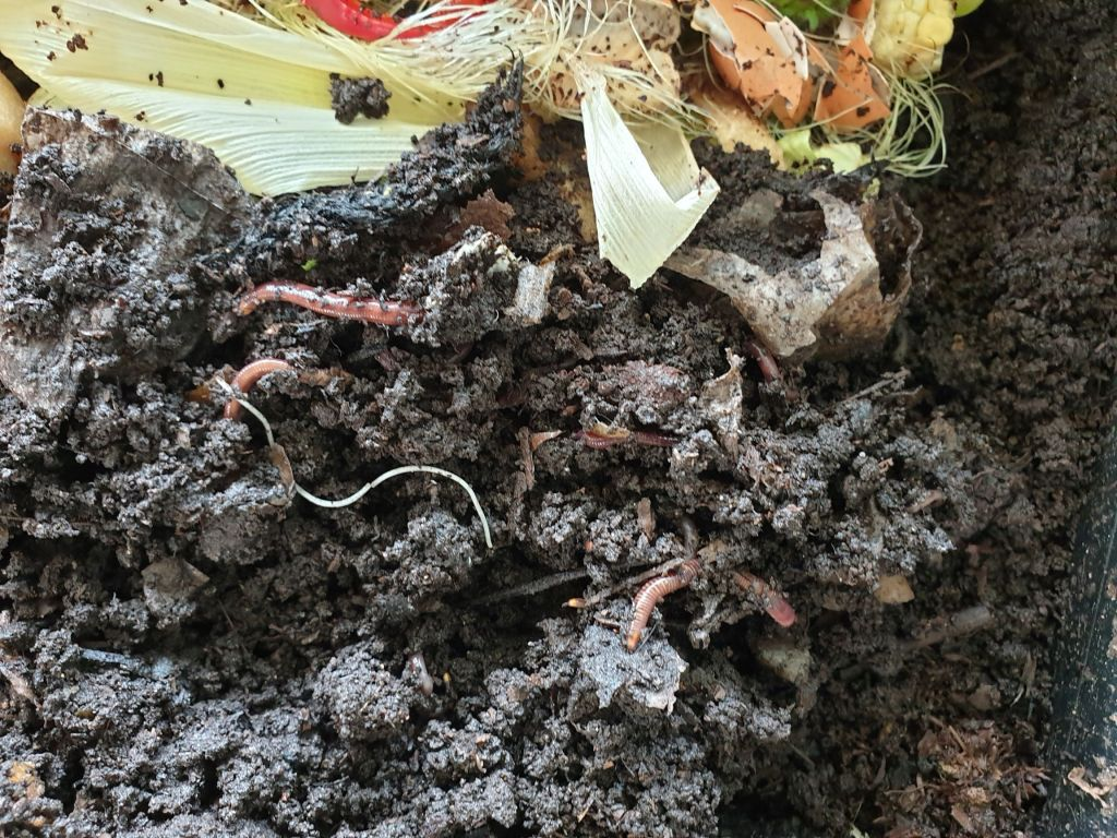 Close-up of worms and their food in a worm farm