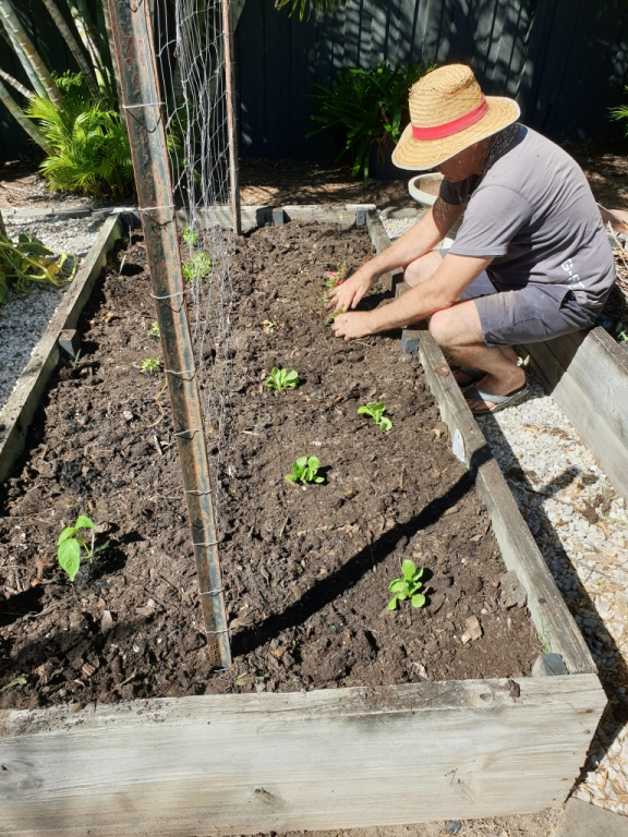 Steps to starting a garden from scratch - plant seedlings or seeds