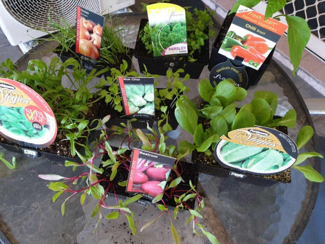 A selection of seedlings ready to be planted